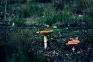 Close-up shot of mushrooms growing in a field - INGF10321