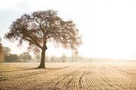 Landscape of a tree in a field - INGF10393