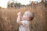 Side view of baby girl standing amidst dry plants - CAVF60019