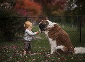 Cute baby boy feeding pumpkin to dog at park - CAVF60130