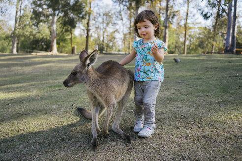 Australia, Brisbane, portrait of little girl stroking tame kangaroo - GEMF02674
