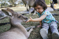 Australia, Brisbane, little girl feeding tame kangaroo - GEMF02680