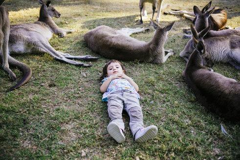 Australia, Brisbane, little girl lying on a meadow between group of tame kangaroos - GEMF02683