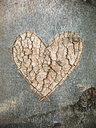 Heart carved into a tree trunk in the woods - IPF00489