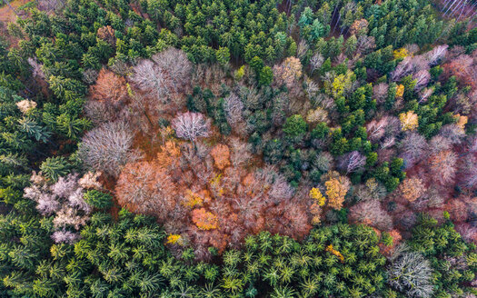 Germany, Baden-Wuerttemberg, Swabian forest, Fils Valley, Aerial view of forest in autumn - STSF01816