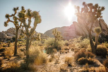 USA, California, Los Angeles, Joshua Tree National Park in sunshine - DAWF00856