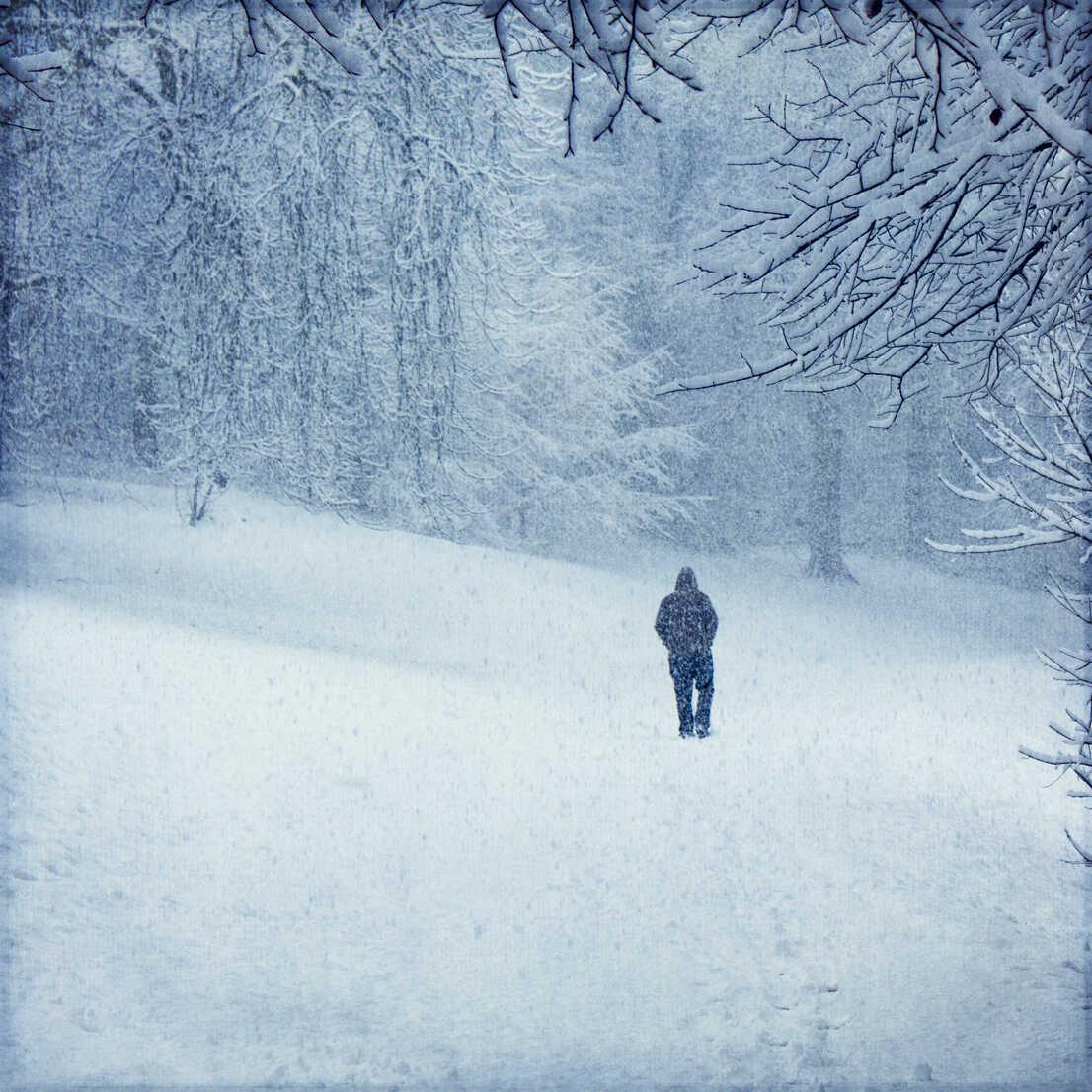Forest in winter near Wuppertal, man during snow fall - DWIF00971 - Dirk Wüstenhagen/Westend61