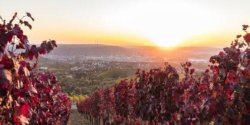 Germany, Baden-Wuerttemberg, Stuttgart Untertuerkheim, vineyards in autumn at sunset - WDF04964