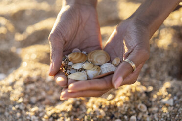 Woman collecting seashells on the beach - AFVF02145
