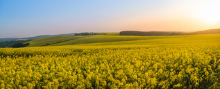 Scenic view of a field in the sun - INGF10474