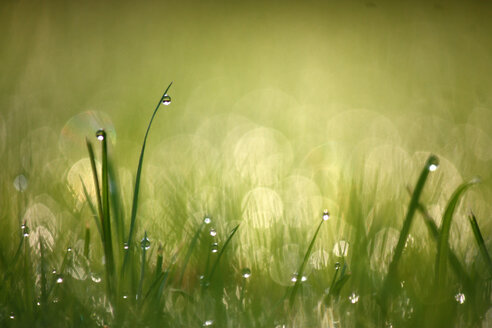Close-up of grass growing in a field - INGF10533