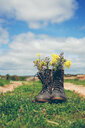 Flower plants growing in a pair of boots on a field - INGF10611