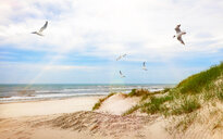 Seagulls flying over beach. - INGF10779