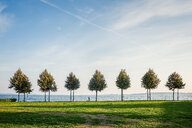 Tranquil scene of trees in a field on a sunny day - INGF10806