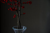 Studio shot of red berries against a black background - INGF10936
