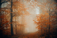 Scenic nature view of a forest during autumn - INGF11098