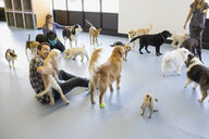 Dog daycare owners playing with dogs - HEROF02053