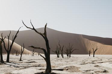 Namibia, Namib desert, Namib-Naukluft National Park, Sossusvlei, Deadvlei and Big Daddy Dune - LHPF00247