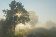 Sunlight streaming through the trees on a hazy day - INGF11297