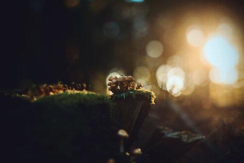 Close-up shot of mushrooms growing on land - INGF11321