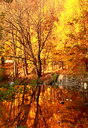 Nature scene of trees reflecting into a lake during autumn - INGF11432