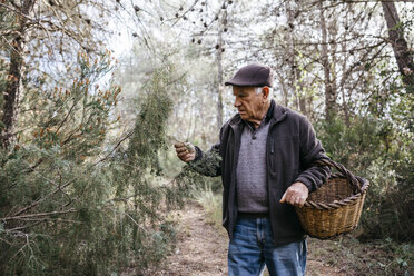 Senior man with basket in the forest examining tree - JRFF02239