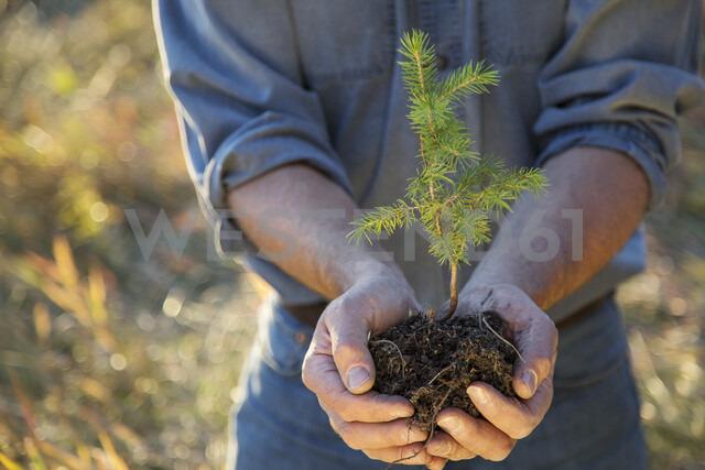 Man cupping tree sapling - HEROF03379 - Hero Images/Westend61