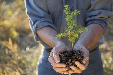 Man cupping tree sapling - HEROF03379