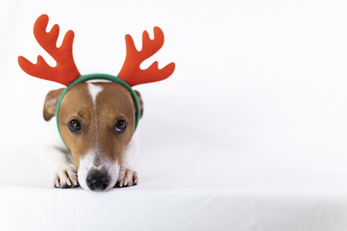Portrait of dog wearing reindeer antlers headband - JPF00333