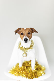 Portrait of dog wearing golden garland and Christmas bauble sitting on chair - JPF00336