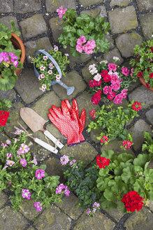 Various potted spring and summer flowers, gardening tools and gloves on cabblestone pavement, top view - GWF05735