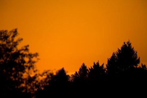 Germany, Wuerzburg, Trees and orange sky at sunset - NDF00852