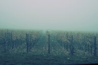Scenic nature view of a field on a foggy day - INGF11463