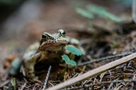 Close-up shot of a frog on land - INGF11595