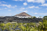 Spain, Canary Islands, Lanzarote, La Geria, view to wine-growing district with volcanic cone in the background - RUNF00597