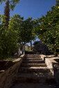 Morocco, Lalla Takerkoust, orange trees in garden - LMJF00080
