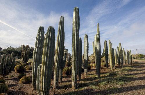 Morocco, Cactuses - LMJF00086