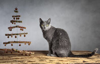 Portrait of a cat sitting on a wooden table - INGF11710