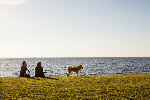 Rear view of young couple with dog sitting on grassy landscape by sea against clear sky - ASTF00114