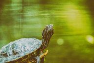 A turtle - INGF11761