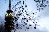 Low angle view of cherry blossoms on a tree - INGF11818