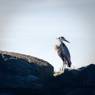 A wild bird - INGF11827