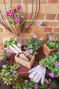 Various potted spring and summer flowers, gardening tools and gloves - GWF05760