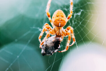 Close up shot of a spider on a web - INGF12070