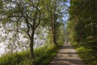 Germany, Bavaria, Werdenfelser Land, female hiker on forest path - SIEF08258
