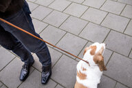 Low section of man standing with Basset Hound on sidewalk - ASTF00444