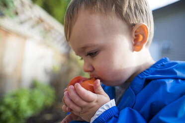 Baby boy eating tomato from vegetable garden - AURF08143