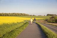 Germany, Ruegen, hikers at Cape Arkona, rape field - MAMF00265