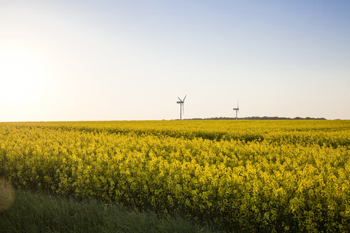Germany, Ruegen, Cape Arkona, wind wheels at rape field - MAMF00268