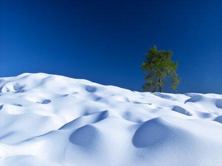 Austria, Salzkammergut, larch in snow - WWF04662